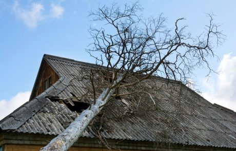 Dachschaden durch Baum